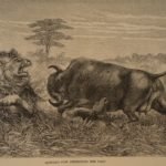 1858 1st ed David Livingstone AFRICA Missionary Voyages Congo Illustrated MAP