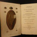 1831 1ed Manual of Shells William Turton Color Illustrated Conchology Seashells