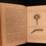 1876 1ed German Charles Darwin Insectivorous Plants Carnivorous Botany Evolution