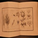 1797 EXQUISITE Bernardin Saint-Pierre Etudes Nature Illustrated Botany Plants
