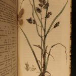 1825 BOTANICAL Hortus Gramineus Woburnensis Sinclair Botany Illustrated DARWIN
