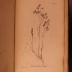 1762 Natural History of Stillingfleet BOTANY Linnaeus Illustrated Plants Flora