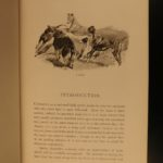 1892 Coursing & Falconry Illustrated Sports HUNTING Britain Badminton Library