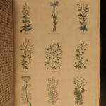 1850 English Physician Culpeper HERBAL Cures Alchemy Astrology Color Illustrated