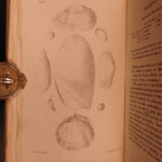 1823 1ed John Mawe Linnaean System of Conchology Mollusks Zoology Illustrated