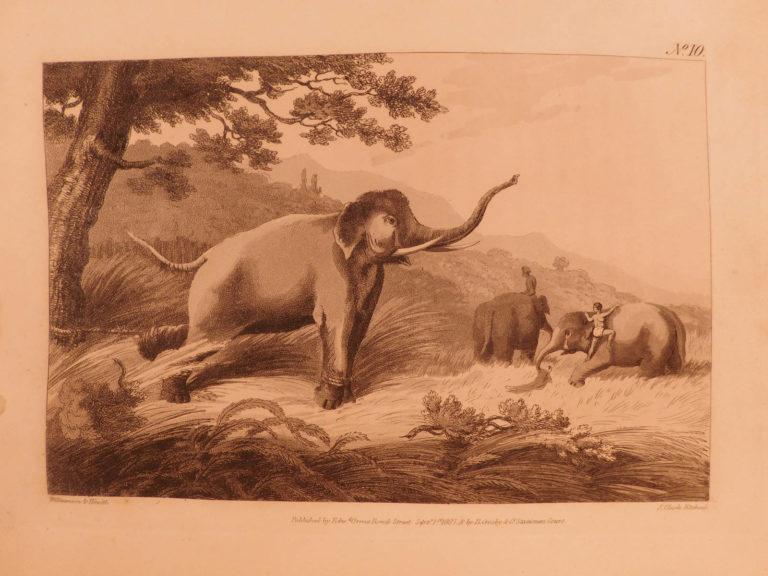 Image of 1808 1st Oriental Field Sports INDIA Big Game Hunting Bengali Elephants 2v SET