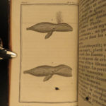 1804 WHALES Natural History Narwhals Illustrated Lacepede Cetology Dolphins 2v