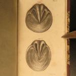 1825 Veterinary Art Cows Horses Animal Medicine Pharmacology Anatomy 4v White