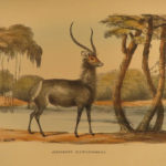 1852 Wild Sports of Southern Africa Harris Big Game Hunting Illustrated Binding