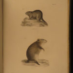 1842 1ed New York Zoology Natural History of Mammalia James De Kay Illustrated
