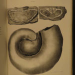 1847 New York Paleontology Natural History James Hall Illustrated Fossil Geology