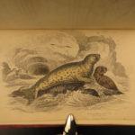 1840 SEA MONSTERS Color Illustrated Jardine Seals Sea Lion Manatee Walrus Marine