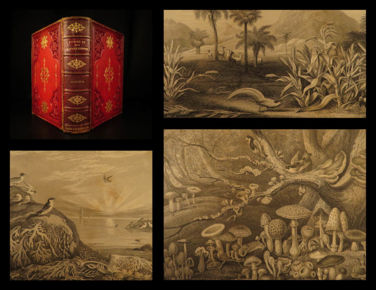 Image of 1857 Rhind BOTANICAL History Vegetable Kingdom Plants Botany Color Illustrated