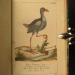 1782 1ed BIRDS Ornithology Zoology Borowski Animals Ducks Albatross Illustrated