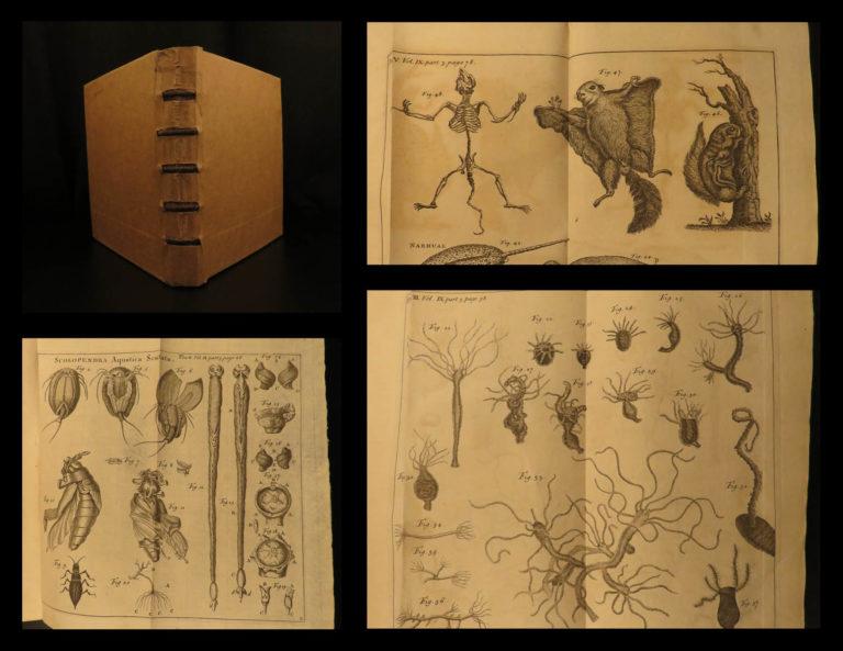 Image of 1747 1ed Martyn Philosophical Transactions Zoology Navigation Optics Science