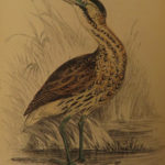 1840 Jardine BIRDS 34 Hand-Colored Illustrated Aviary Ireland Quails ORNITHOLGY