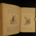 1876 1ed Jules Verne Voyage Round the World South America Illustrated Routledge