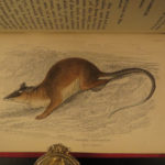 1841 Naturalists Jardine Mammalia Marsupial Kangaroo Koala Color Illustrated