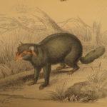 1844 Naturalists Jardine Mammalia BIG CATS Bat Bear Lion Zebra Color Illustrated
