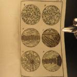 1785 Buffon Natural History SCIENCE Color Illustrated Evolution Microbiology 5v