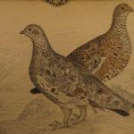 1843 Jardine Hunting Game BIRDS 31 Hand-Colored Illustrated Quails ORNITHOLGY